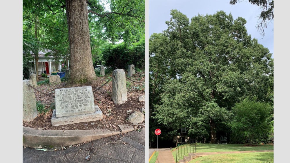On the left, a stone placard with undecipherable writing stands before a large tree fenced in behind a black chain; on the right, a large tree in the distance with a small stop sign on the left side.
