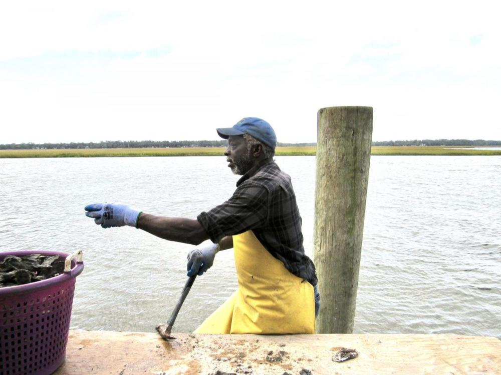 In Townsend, Herman Armstrong of Sapelo Island, uses a hammer to break up clusters of local oysters at Sapelo Sea Farms in McIntosh County.