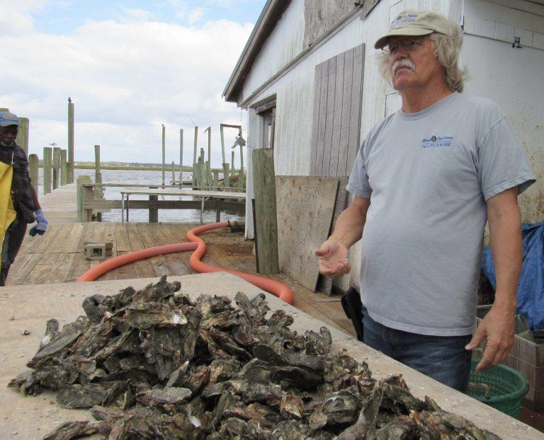 In Townsend, Charlie Phillips, owner of Sapelo Sea Farms, is hoping to be among the first to take part in Georgia's revived oyster industry.