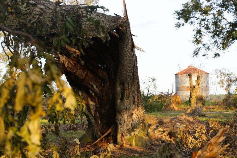 Hurricane Michael wiped out about one-fifth of Georgia's pecan acreage in 2018. Many farmers have since replanted the trees they lost, but this year brought another cruel setback: low prices for their abundant crops.