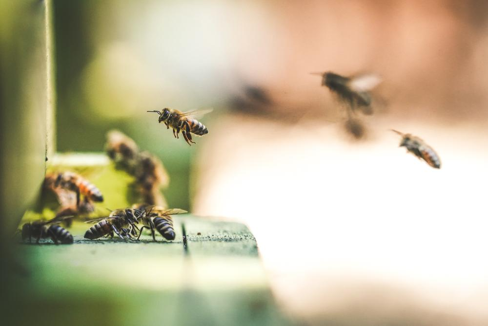 A honey farm in Rocklin, CA is home to over 300,000 busy bees.