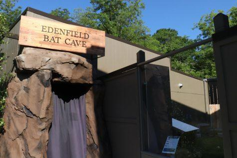 Black curtains and an artificial rock structure mark the entrance to the Edenfield Bat Cave at the Museum of Arts and Science in Macon.