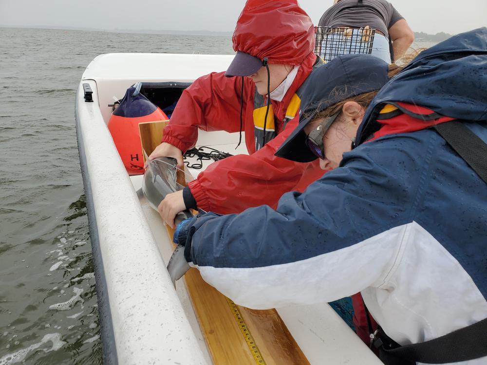 two women on a boat in rain gear hold a shark on a board to measure it