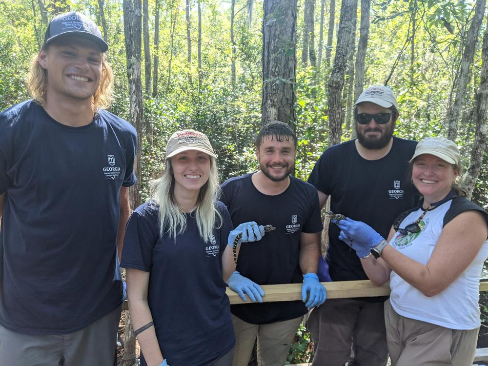 The Coastal Ecology Lab team welcomes the new hatchlings.