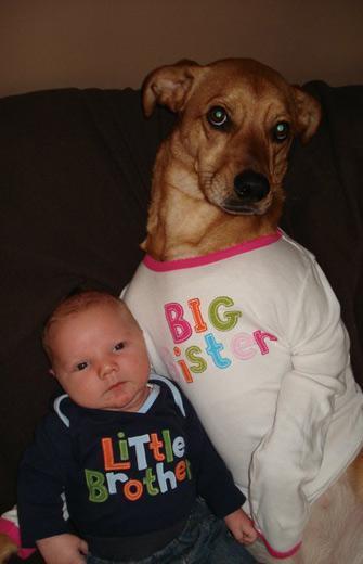 baby-dog-dogsofinterwebs.jpg
