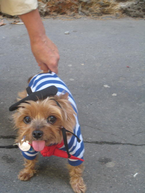 bastille-day-dog.jpg