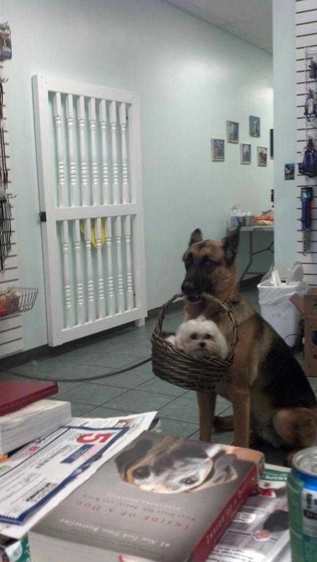 dog-carrying-dog-in-basket.jpg