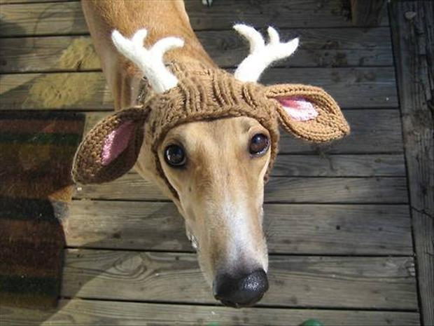 dog-with-reindeer-antlers-funny-dogs.jpg