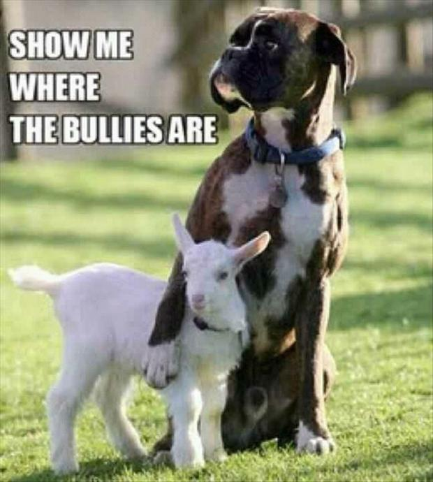 funny-dog-protects-small-goat.jpg
