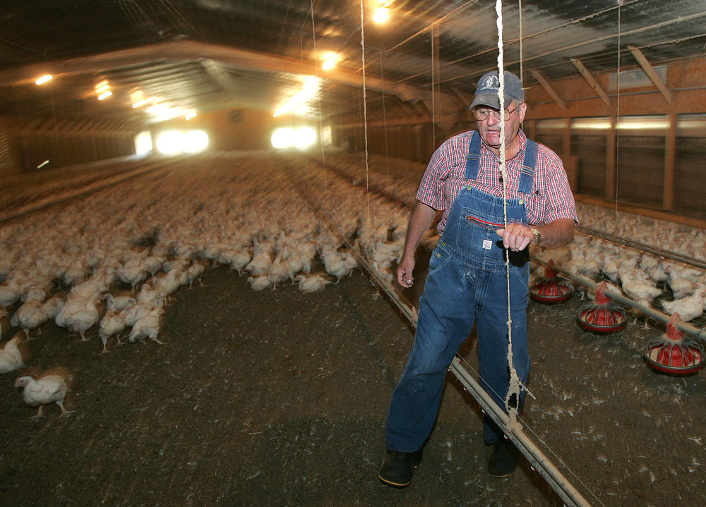 Poultry farmer Dempsey Miford walks through his family's chicken house in Cumming, Georgia.