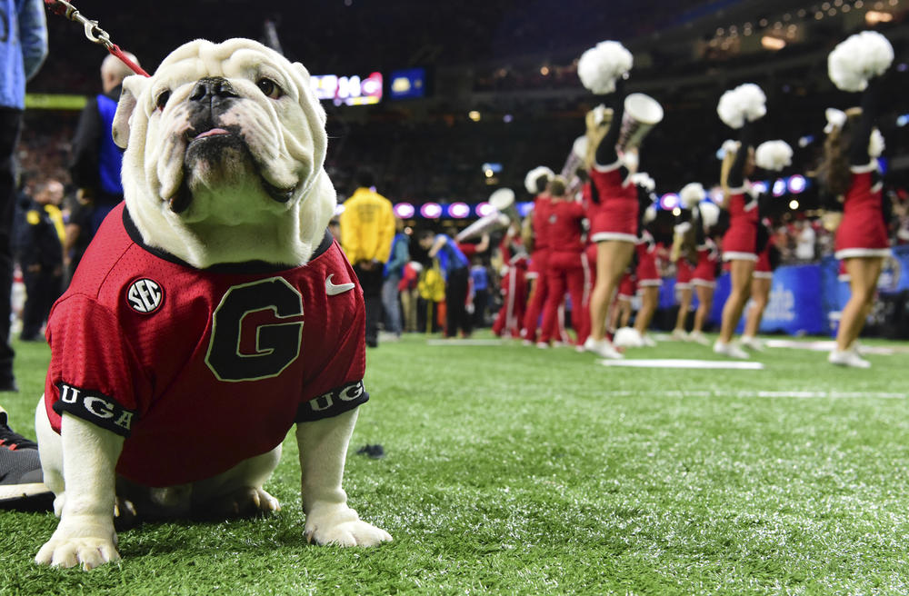 UGA's mascot, Uga the bulldog, is expected to cheer on the team at Mercedes-Benz Stadium.
