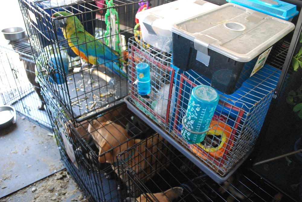 Kayla Simmons transported animals, including dogs, a bird and many reptiles, in the back of a horse trailer to avoid the hurricane and prolonged power outages.