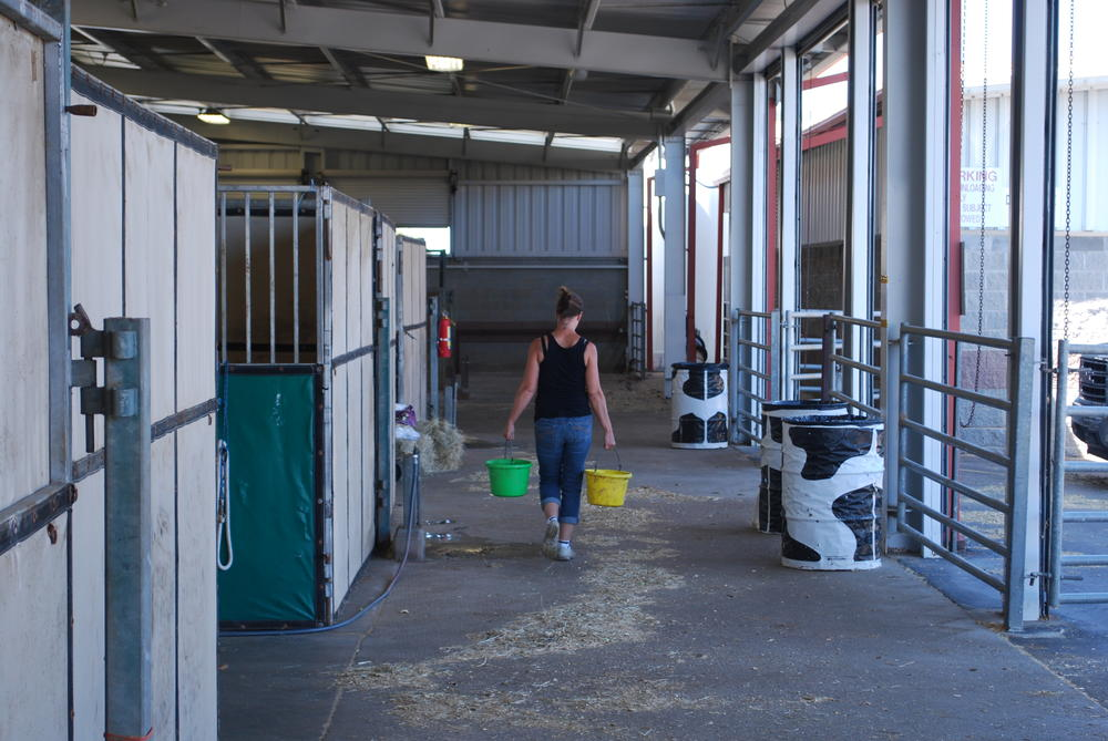 A horse owner carries water to animals on Saturday.