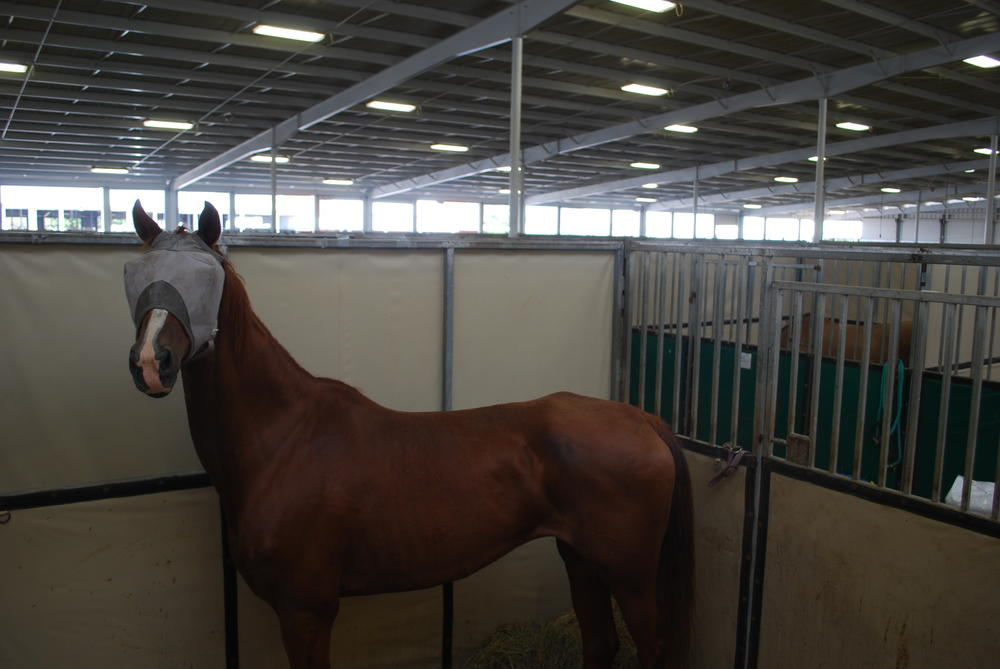 A horse in a fly mask stays alert in her stall.