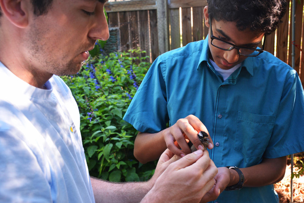 Smithsonian scientist Clay Graham (left) passes a downy woodpecker to Aniketh Venkateswaran to release. Participation is a big part of the Neighborhood Nestwatch program.