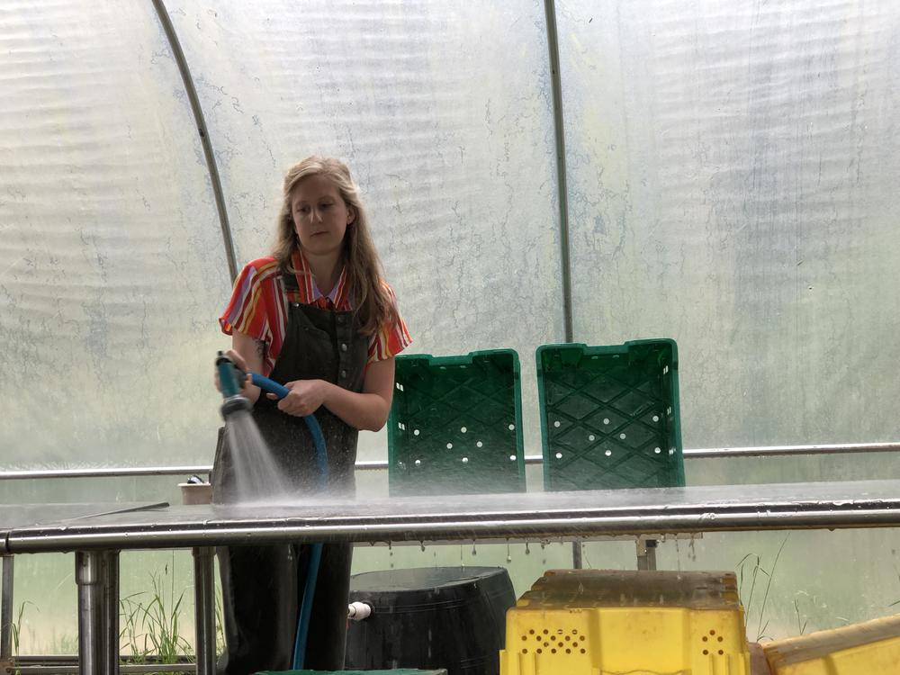 Lily Dabbs sanitizes the table before washing a recent harvest for the UGAden Club.