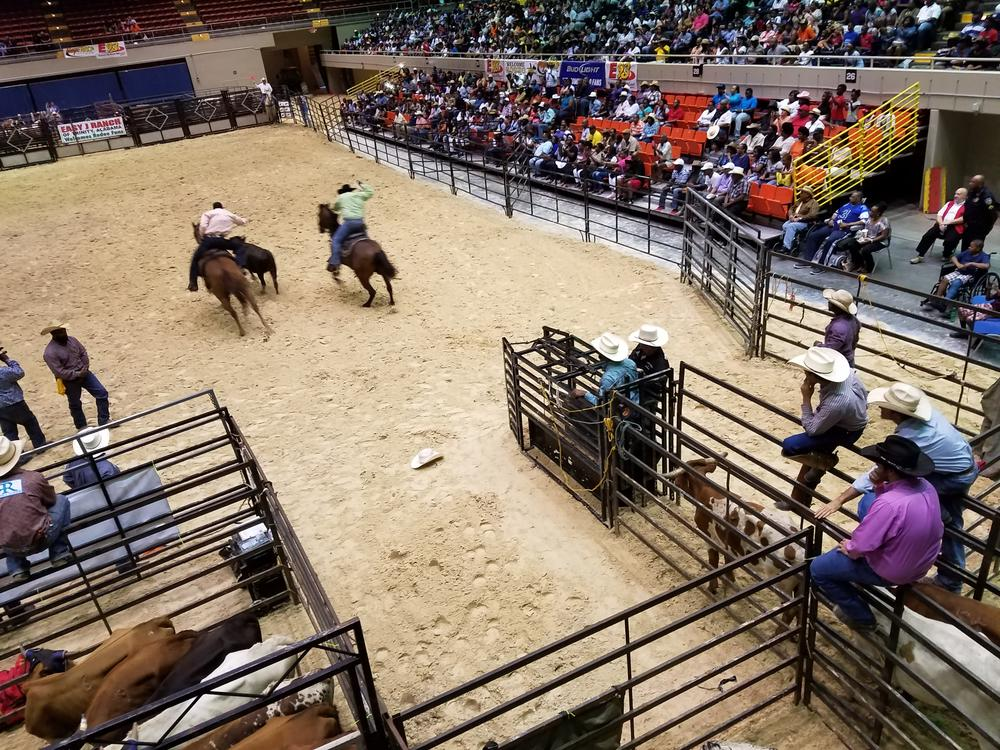 Cowboys look on as two ride out after a steer. The rider on the left will jump off his horse to wrestle the steer to the ground.
