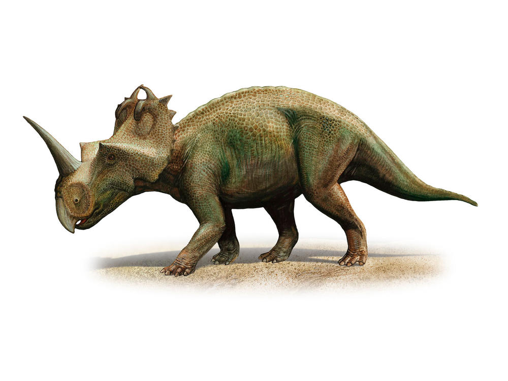 Scientists in Canada have diagnosed malignant cancer for the first time in a dinosaur, a <em>Centrosaurus apertus</em> from 76 to 77 million years ago.