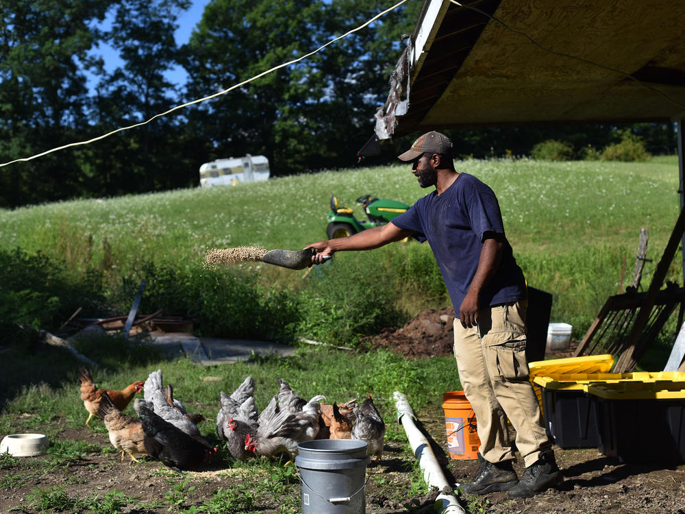 Daryl Minton, 45, throws chicken feed into a yard where the chickens roam at the Triple J Farm in Windsor, N.Y. Minton lives and works on the farm his grandfather, James Minton, bought it a decade ago. Between lending discrimination and rising costs, many obstacles stand in the way of Black Americans looking to own farmland.