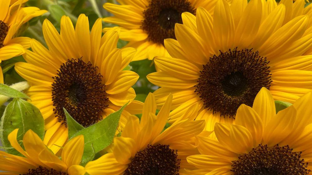 Sunflowers from the Miyagi area of Japan are featured in the Olympic bouquets.