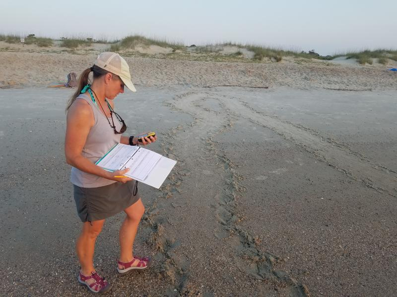 Tammy Smith records GPS data for a turtle crawl on Tybee Island in 2019.