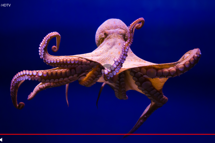 GPB TV picture of octopus