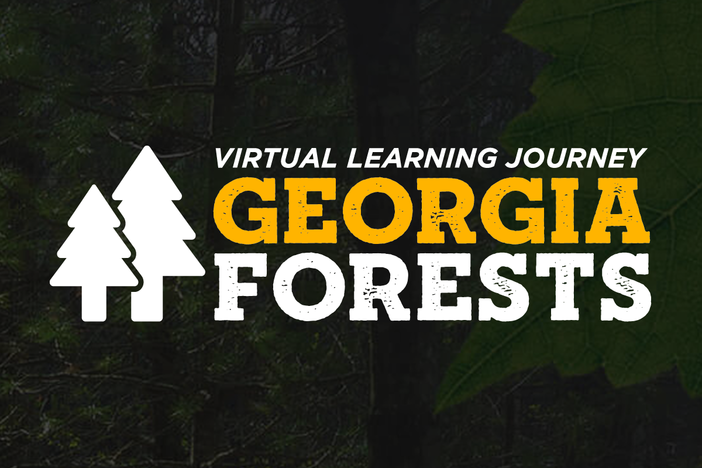 Georgia Forests teaser
