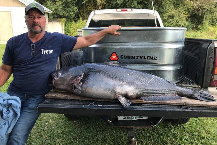 Fisherman Tim Trone poses with his record blue catfish, which takes up most of a pickup truck's tailgate.