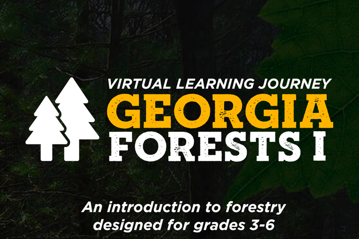 Georgia Forests I