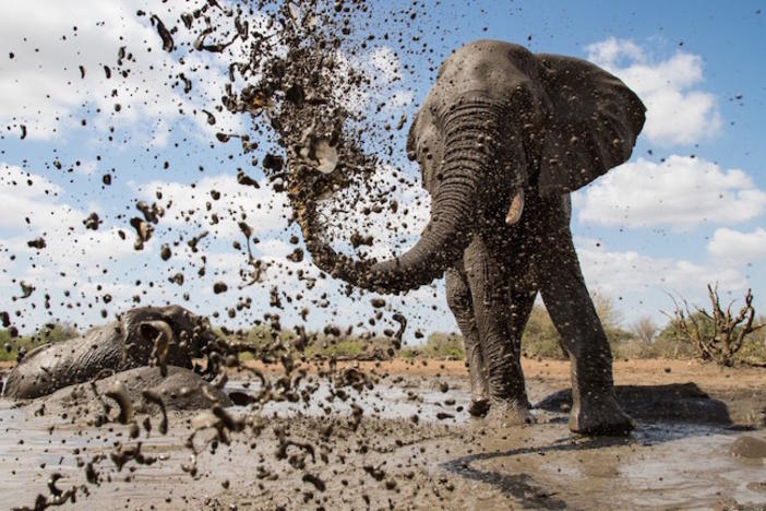 An elephant at a muddy watering hole.
