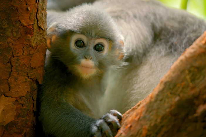 Meet the scientists making groundbreaking discoveries to safeguard the future of primates.