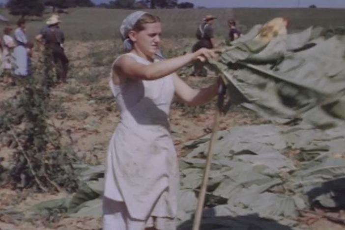 This 1940s video shows the Amish Huyard family harvesting using traditional methods.