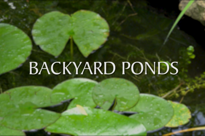 Georgia Outdoors takes viewers on a pond tour with a show that answers questions for someo