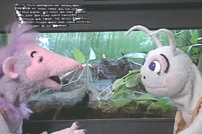 Blossom and Snappy visit the zoo and compare the animals in many different ways.
