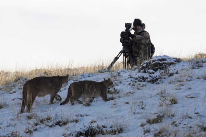 Go behind the scenes of Pumas: Legends of the Ice Mountains.