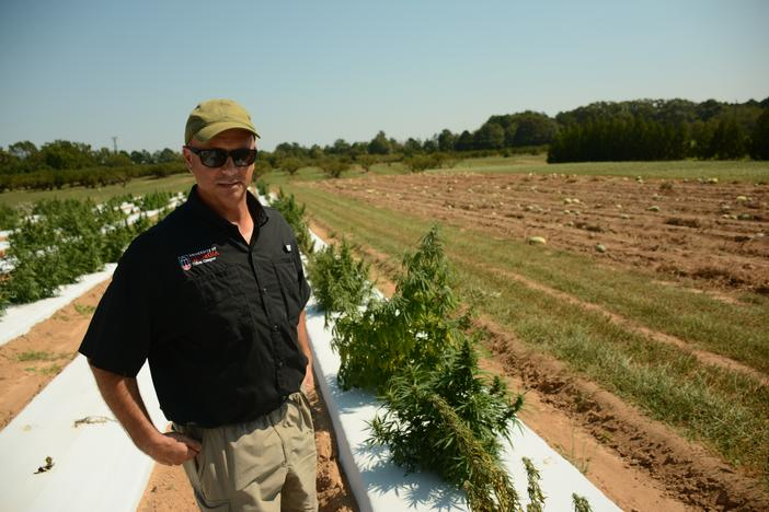 Tim Coolong, a professor with the University of Georgia, is in charge of oversseeing the state's firs legal industrial hemp field since the Hemp Farming Act was signed earlier this year.