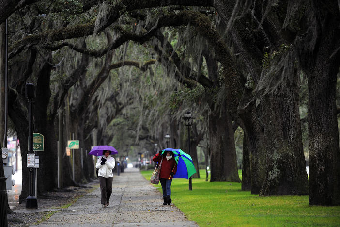 Savannah's famous trees and Spanish moss make for a lot of debris, which can clog storm drains and damage water quality.