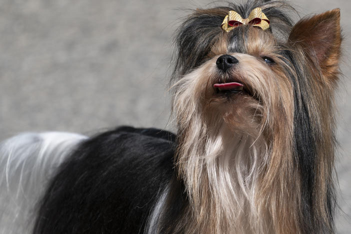 The Westminster Dog Show Is This Weekend. Meet The Newcomers And Revisit Past Winners